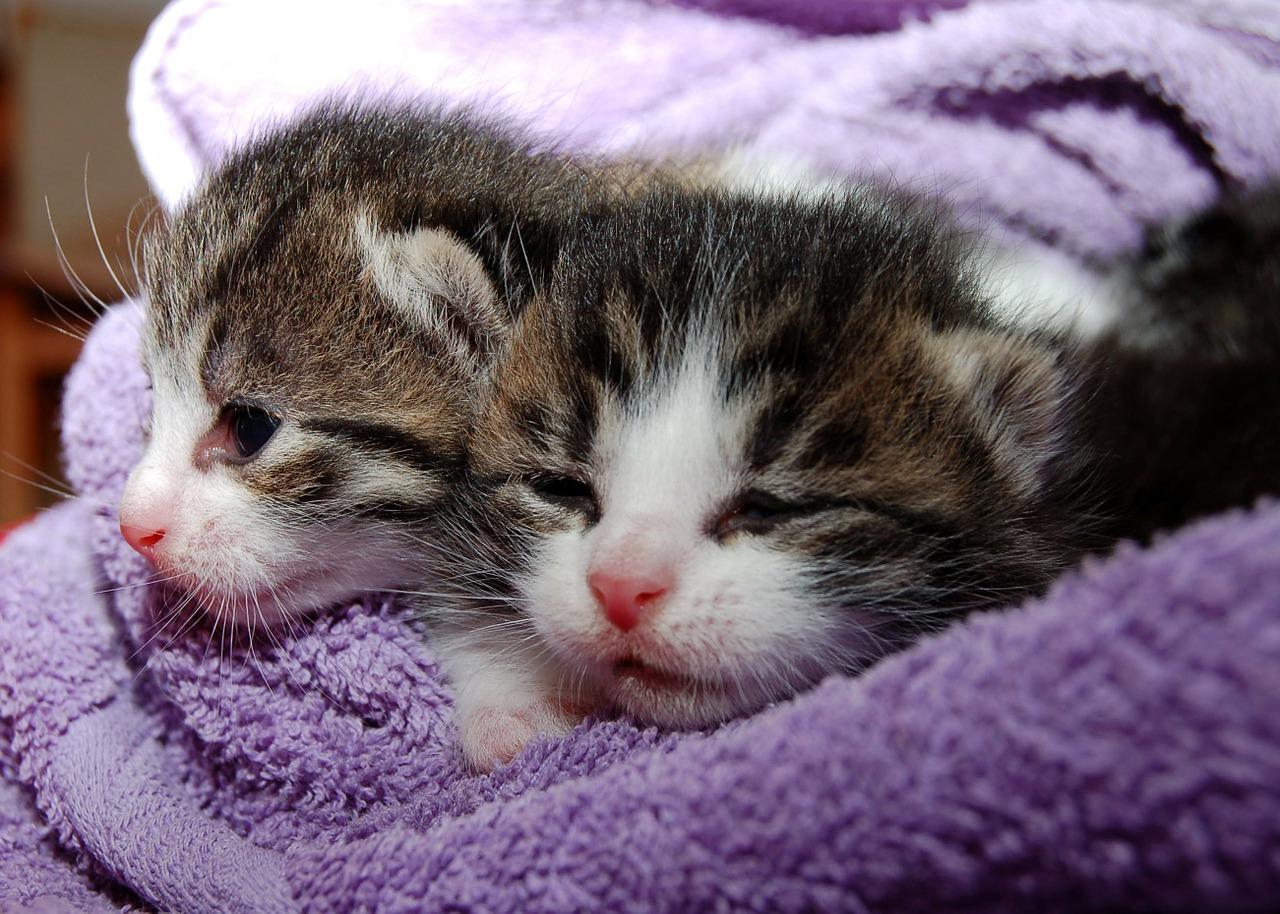 Katzenschnupfen Symptome