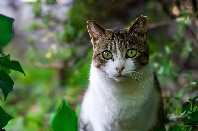 Zeckenschutz bei Katzen