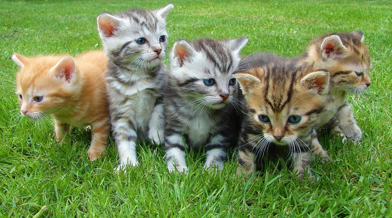 Katzenentbindung