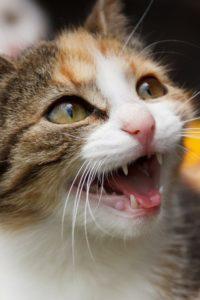 Katze richtig annähern