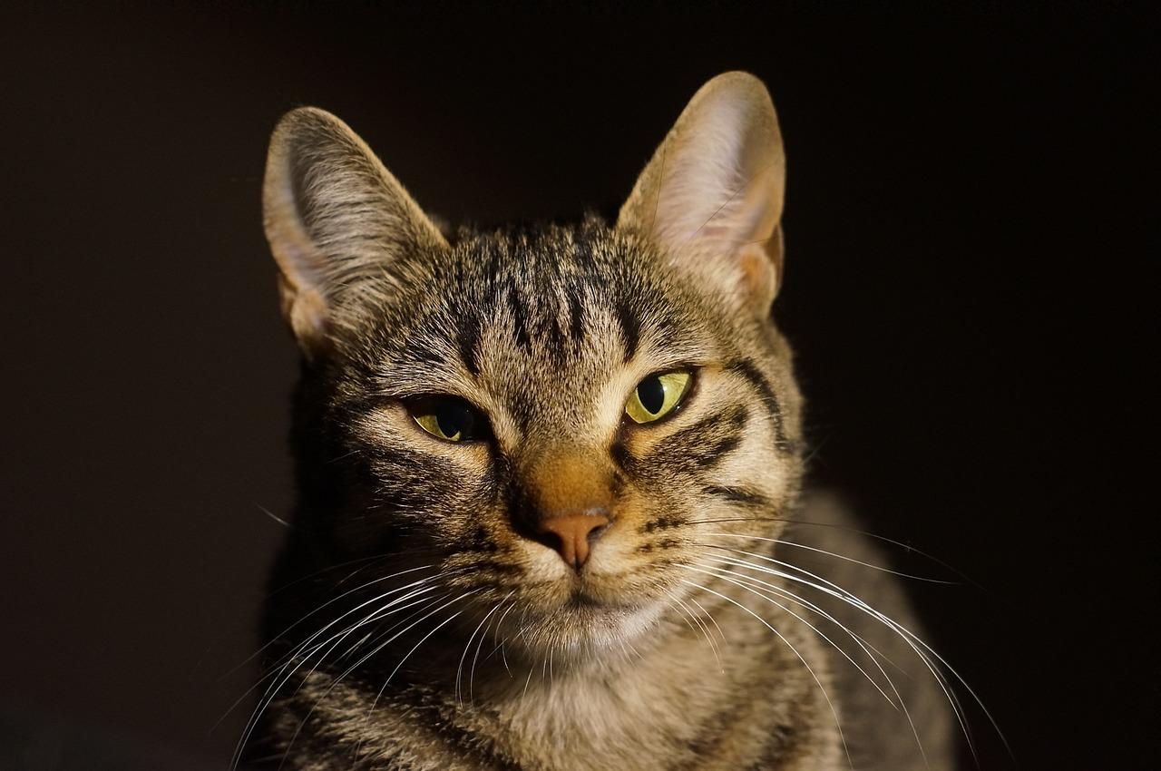 Katze richtig begrüßen