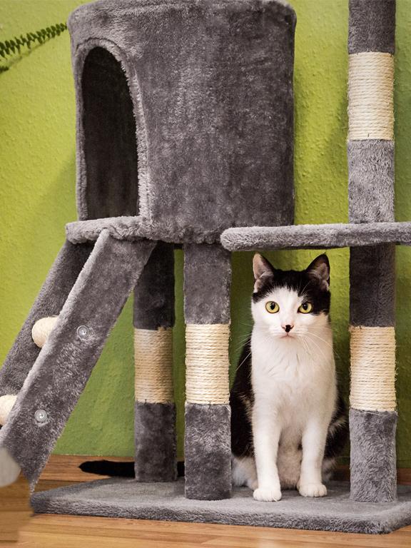 darum brauchen katzen einen kratzbaum. Black Bedroom Furniture Sets. Home Design Ideas